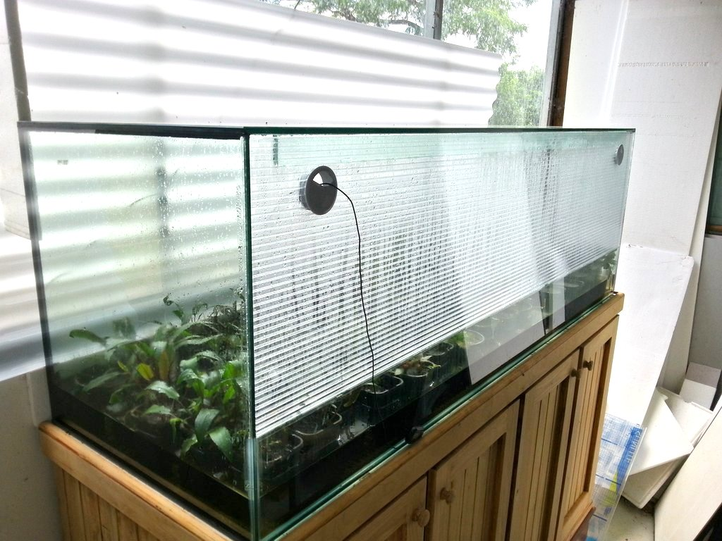 Large aquarium for growing emersed crypts