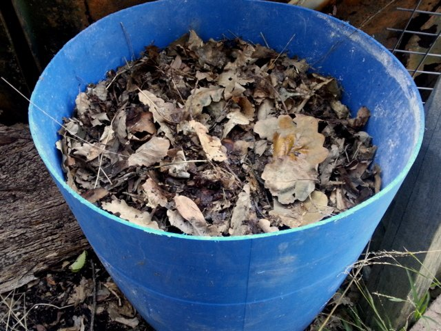 Composting oak leaves